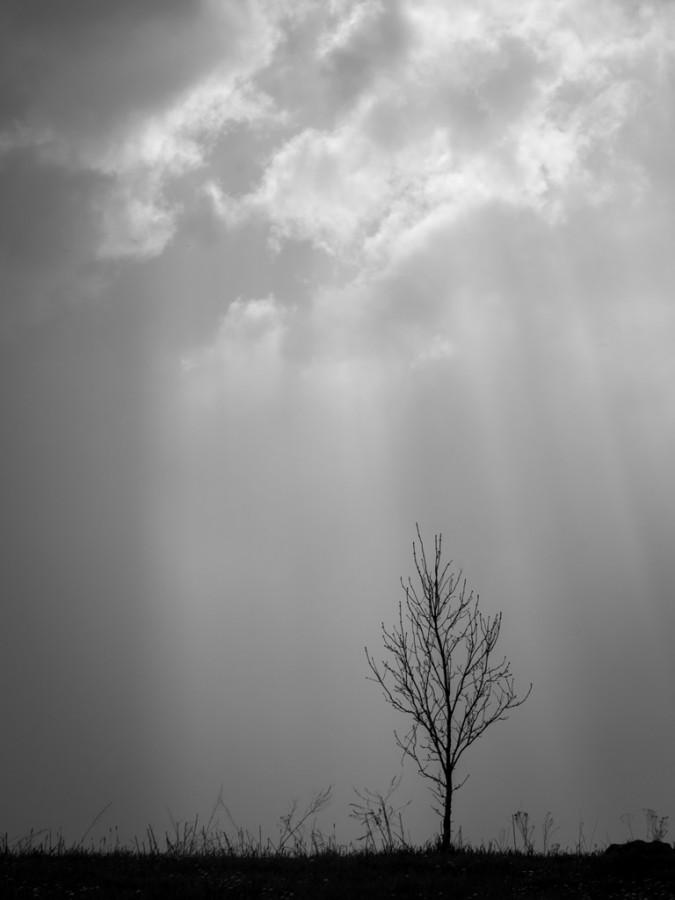 zdjęcie Iwona Nabzdyk
